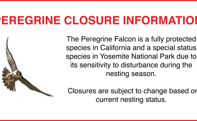 Peregrine Closure Update: 8/01/16