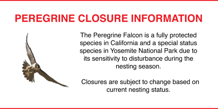 Updated: Peregrine Closure 4/26/17